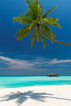 Luxury over-water bungalow at Gili Lankanfushi Resort Maldives and beach with Palm trees,Voted Best Hotel in The world for 2015