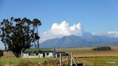 Swartland region - between Wellington and Malmesbury - Western Cape - South Africa