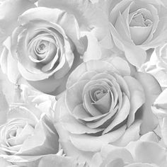 Madison Rose Wallpaper Soft Grey - Wallpaper from I Love Wallpaper UK Wallpaper Uk, Metallic Wallpaper, Aesthetic Iphone Wallpaper, Flower Wallpaper, Pattern Wallpaper, Aesthetic Wallpapers, Feature Wallpaper, Bedroom Wallpaper, Painting Wallpaper