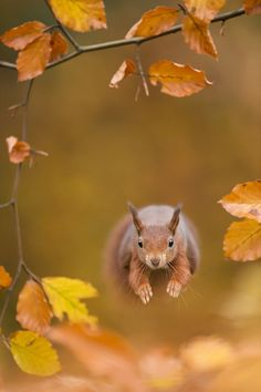 Dutch photographer Edwin Kats photographs small animals in utterly charming way. In this series, Edwin took a photos of small animals in autumn. www.edwink