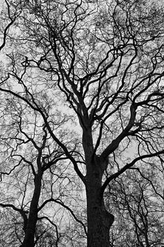 "haxanbroker: "" Branches. """
