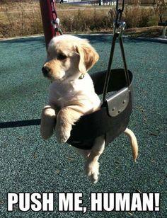 You heard the pup!