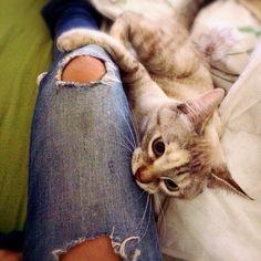 Argh is a kiss by cat.. Sooo wild