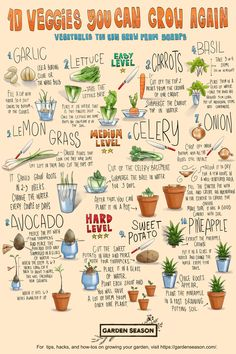 Learning to reuse what's left of your fruits and vegetables is both practical and fun. Ultimately, growing food from scraps is a good addition to your expanding gardening skills.  Take a look at this directory of kitchen staples you can enjoy all over again. You'll be surprised by how much you can minimize kitchen wastes and use them as food source instead! Vegetable Garden For Beginners, Gardening For Beginners, Gardening Tips, Vegetable Gardening, Easy Vegetables To Grow, Fruits And Vegetables, Veggies, Pig Breeds, Garden Projects