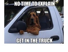 Yes, This Is Dog: 31 Of The Best Dog Memes Ever (Slide #52) - Pawsome