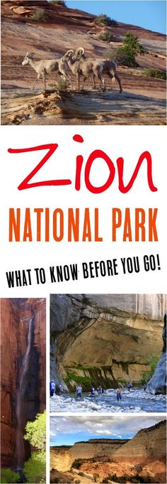 Read these Zion National Park Hikes for the best hikes, tips on what to wear, what to bring, + more before you plan your visit to Zion!