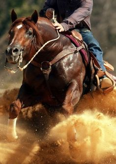 Just look at the power of this horse! #Cowboy #LifeOutWest #Horse #Rodeo