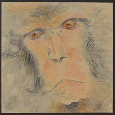 Macaque face