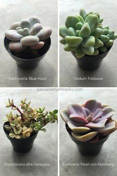 Caring for succulents