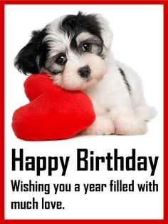 Send Free Vivid Birthday Fireworks Card to Loved Ones on Birthday & Greeting Cards by Davia. It's free, and you also can use your own customized birthday calendar and birthday reminders. Happy Birthday Puppy, Happy Birthday Wishes Quotes, Happy Birthday Pictures, Happy Birthday Greetings, Birthday Greeting Cards, Cute Birthday Messages, Card Birthday, Birthday Fireworks, Les Fables