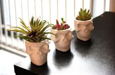 Mini Ceramic Skull Planter