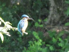 Wimbles Farm, East Sussex. Camping, fishing, campfires and our kingfisher - what more do you need http://www.organicholidays.co.uk/at/3134.htm