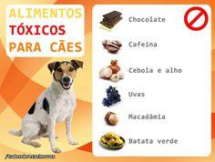 Separamos os alimentos humanos que são tóxicos para os cachorros. Jamais forneça essas comidas para o seu cão, mesmo em pequenas quantidades.