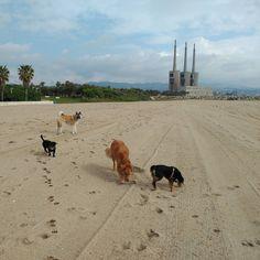 Paseo matinal aprovechando los ultimos dias de playa con perros. :) Hachi Zoom Sasha Shandy.