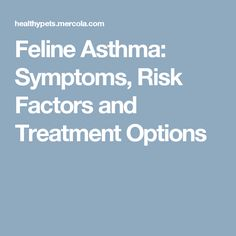 Feline Asthma: Symptoms, Risk Factors and Treatment Options