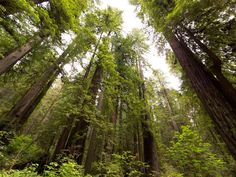 This enchanted forest of giant trees is located next to miles of empty beach, combining history, culture, wonder and nature in 1 beautiful location. As sunbeams break through the towering canopy, you'll feel as though you've been transported into a real-life fairy tale. Redwood National Park is truly an awe-inspiring escape for wildlife and nature enthusiasts.