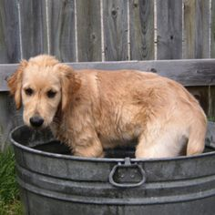 Gusto: bath time