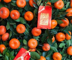 Why Mandarin Orange or Kumquat Trees | Chinese New Year