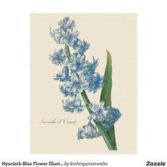 Hyacinth Blue Flower Illustration Postcard
