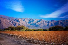 Vineyard in the ultimate land of sunshine: Cafayate! Daytime high's in the 90's with clear sunny blue skies is a wintertime pleasure here in Northern Argentina.  View our upcoming events here http://www.lec.com.ar/visit/events/