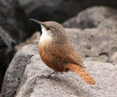 Colorado River's Sublime National Park Birding Experiences