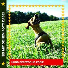 Dackelmix Eddie Ich genieße die Sonne! ☀ #Hund: Eddie / Rasse: #Dackelmix      Mehr Fotos: https://magazin.dogs-2-love.com/hund-der-woche/dackelmix-eddie/ Foto, Hund, Natur, Sommer, Sonne