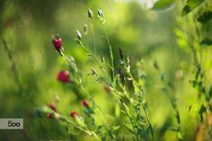 recalling summer... by Roman Bilan on 500px