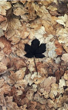 Art on your walls: Andy Goldsworthy: Fall Leaves Land Art, Black Leaves, Foto Art, Environmental Art, Natural Forms, Art Plastique, Belle Photo, Graphic, Autumn Leaves