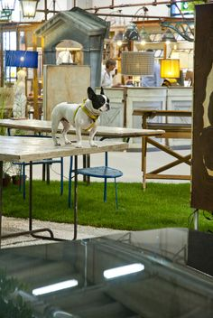 #Mercanteinfiera loves #dogs