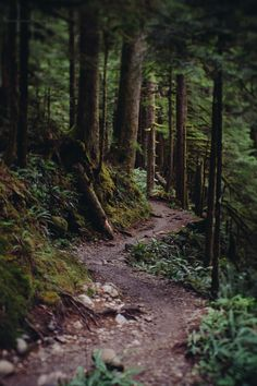 Lens Perspectives — jasonhavenphoto: Jason Haven - Lake Twenty Two,. Forest Trail, Forest Path, Beautiful World, Beautiful Places, Granite Falls, Nature Sauvage, Forest Bathing, All Nature, Walk In The Woods