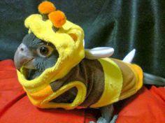 Is it a bird, is it a bee ! #funnyanimals #funnyanimalpictures
