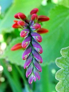 Flower, via Flickr.