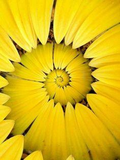 Love  flower's