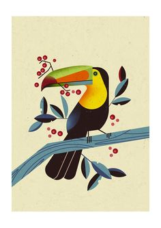 East End Prints - Toucan 2 by Dieter Braun, $28.22 (http://www.eastendprints.co.uk/toucan-2-by-dieter-braun/)