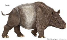 Extinct genus of mammals of the late Pliocene and the Pleistocene Epoch (about 3.6 million to 11,700 years ago) in South America. The genus is representative of an extinct family...