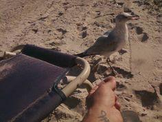 My friend, Bugsy Seagull.