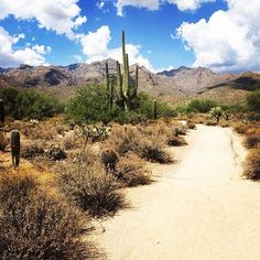 Right this way for adventure! Sabino Canyon - Tucson, Arizona   (Sabino Canyon photo via Instagram by @brit_8_26)