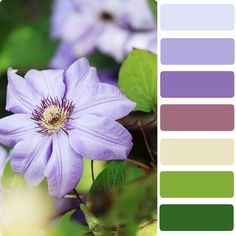 Color Palette Garden Designs: Incorporating Pantone Color Palettes In The Garden Vertical Pallet Garden, Herb Garden Pallet, Bedroom Colour Palette, Colour Pallette, Colour Combo, Pantone Colour Palettes, Pantone Color, What Is Pantone, Palette Garden