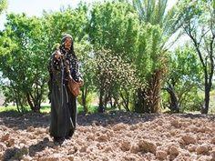 Jesus tells a parable about a sower. (Matthew 13:1-23, Mark 4:1-20, Luke 8:1-15): Slide 2