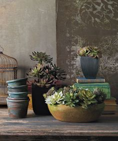 These true-to-life (no joke) flowers and plants will let you say bye-bye to watering (or forgetting to water) for good.