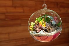 love this little succulent terrarium