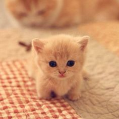A cute cat picture to brighten your Thursday morning x #cutecats #etherealcharms