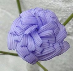 The Chicory Flower 22 Insanely Cool Conversation-Piece Plants For Your Garden. Yep, this is the same plant used to make chicory coffee, and you can put the leaves in your salads. They should be planted in full sun. Get the seeds here. Strange Flowers, Unusual Flowers, Rare Flowers, Amazing Flowers, Beautiful Flowers, Cool Flowers, Purple Flowers, Weird Plants, Unusual Plants