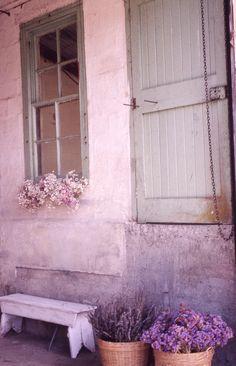 Queenstown Dried Flowers   by cgfan