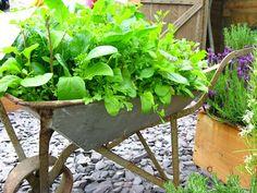 Herb Garden Wheelbarrow!