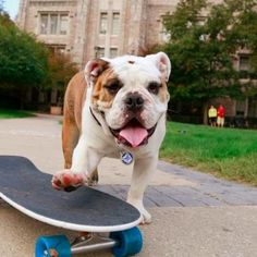Cute, wrinkly Blue II is the Butler Bulldogs mascot and a Twitter superstar. See his adorably slobbery pics here.