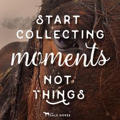 17 Inspirational Horse Quotes & Resolutions for 2017 - - #horse