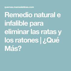 Remedio natural e infalible para eliminar las ratas y los ratones   ¿Qué Más?