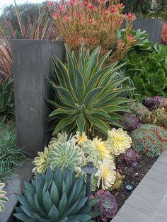 Amazing succulent ideas in 40 spectacular designs - Garten - Paisagismo Low Water Landscaping, Small Front Yard Landscaping, Succulent Landscaping, Succulents Garden, Landscaping Ideas, Garden Landscaping, Backyard Ideas, Mailbox Landscaping, Succulent Ideas