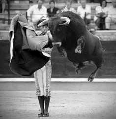 Un toro no siempre hace lo que te esperas.